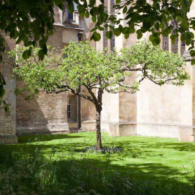 Newton's Apple Tree, Trinity College, Cambridge